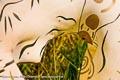 Bodypainting_Tiger_ChinesischeOper_Outdoor_0283.jpg