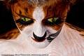 Bodypaint_Katze_05154.jpg