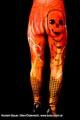 Bodypainting_Magierin_Hexe_Feuer_Fingernaegel_1437.jpg