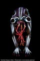 Bodypaint_MechIntron_Alien_07285.jpg