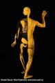 Bodypainting_Skelett_Muskeln_2629.jpg