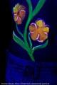 UV_Coconut_2491.jpg