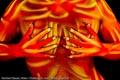 Bodypainting_Bodylines_abstrakt_gelb_rot_braun_03331.jpg