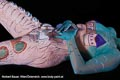 Bodypainting_Griechenland_Aegaeis_specialEffekt_0622.jpg