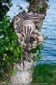 Bodypainting_Txukahamae_Indianer_Brasilien_Tribal_03690.jpg